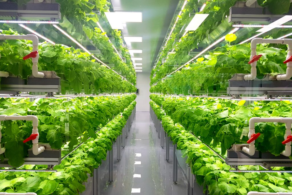 Ocado invests £17m in vertical farming