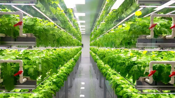 Ocado has ramped up its investment in vertical farming as Brexit and the coronavirus pandemic are set to see the sector grow to £15 billion by 2026.