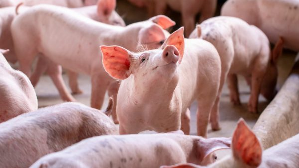 "Waitrose is set to roll out a new mobile app allowing it to assess the ""emotional state"" of animals at its suppliers."