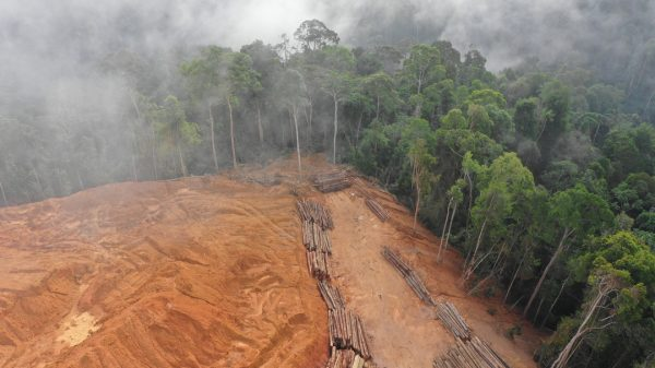 Amazon has joined Britain, the US and Norway to launch a new coalition aimed at reducing and eventually ending deforestation.