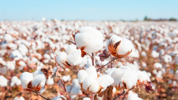 Retraced, a blockchain start-up, is able to trace every single kilogram of cotton from the farm it was harvested at to the garment it is then made into.